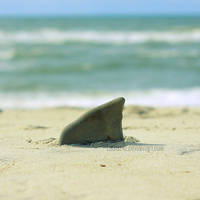 Shark Attack by laura242
