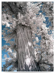 Branch - infrared by LightSculpting