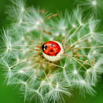coccinelle by all17
