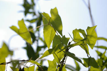 Sunny leaves by flegmatyk