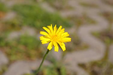 Flower on a parking lot by flegmatyk
