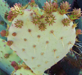 Prickly Heart by lionesspuma