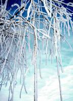 Winter'12 by credosomnium