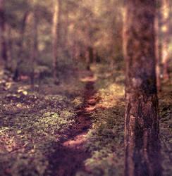 Nature around me 1 by FilipR8