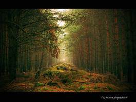 Beautiful Moments of the Woods by FilipR8