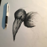 Bird. Work in progress.  by anythingbuthumans