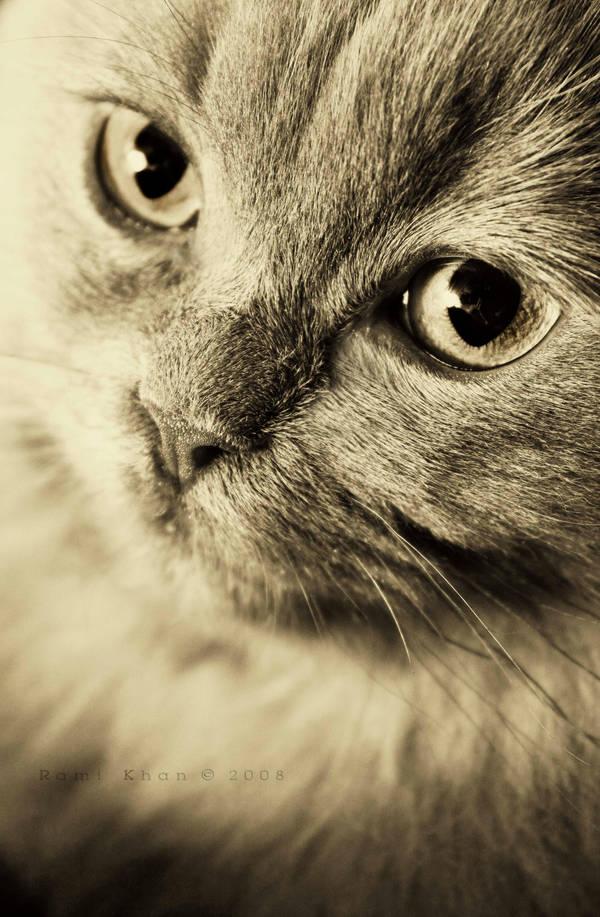 fashion cat by rami777