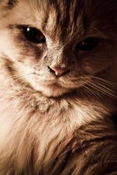 fashion cat 2 by rami777