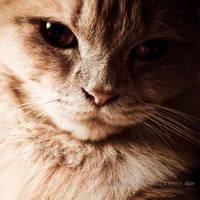 fashion cat x by rami777