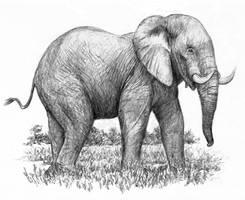 Elephant by dashinvaine