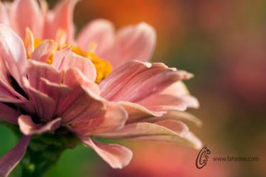 Morning Beauty by fahadee