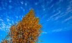 Autumn by Linna89