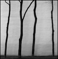 Minimalism by alexeysilaev