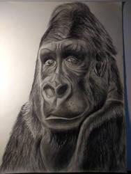 gorilla by randyjackson20