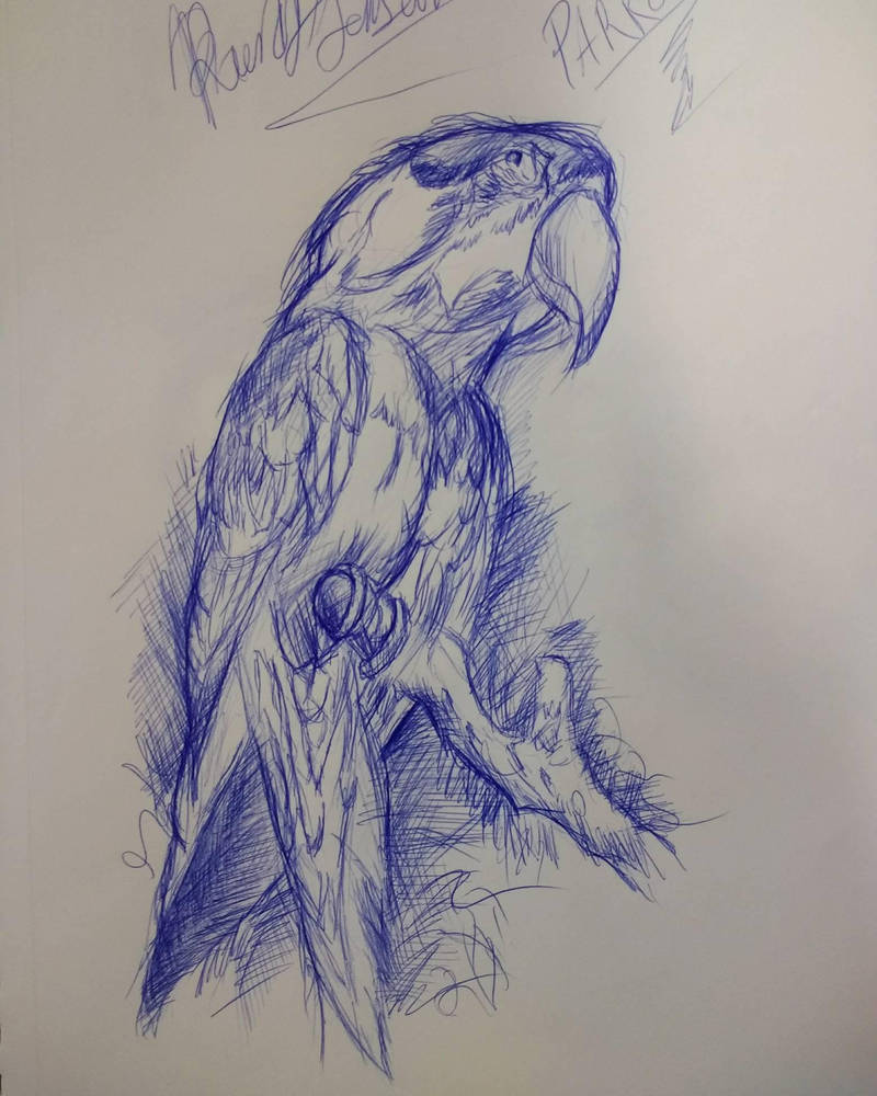 practice ballpoint pen drawing of a parrot by randyjackson20