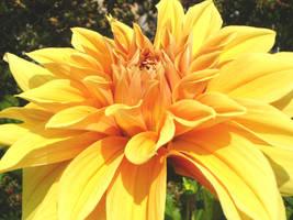 Yellow flower by smudlinka66
