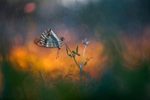Argynnis paphia by RGSeby