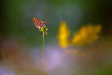 La mariposa y las hojas de bellota by RGSeby