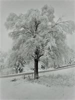 Snowy Tree by Ekatoka