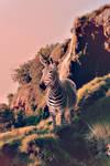 Zebra Wander by Tia-Alir