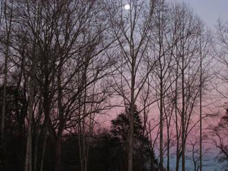 moonlight in daylight by ToastOfTheBurnt527