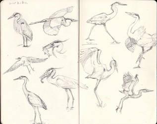 Heron Sketches by Stormslegacy