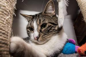 18 Janvier -  Sensibilite feline (13/26) by InterludePhoto