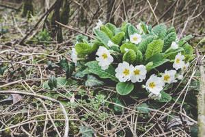 29 Janvier - Comme une fleuraison (21/26) by InterludePhoto