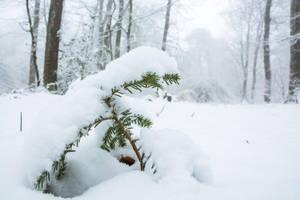 7 Fevrier - Les faux de Verzy sous la neige by InterludePhoto
