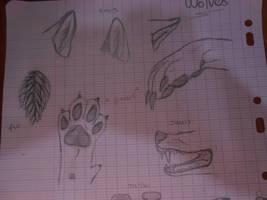 Anatomie loup / Wolf's anatomy by BlastOfWinter