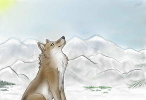 Wolf at the mountains by BlastOfWinter