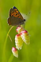 Butterfly Close-up I by dalantech
