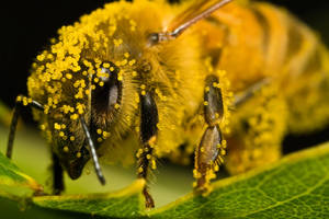 Covered in Pumpkin Pollen II by dalantech