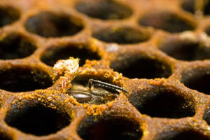A New-Bee I by dalantech