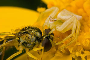 The Price of Pollen VII by dalantech