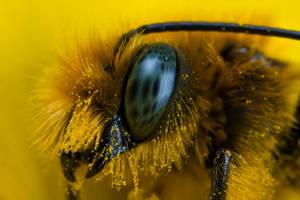 Mason Bee at 4x III by dalantech
