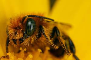 Mason Bee series 1-2 by dalantech