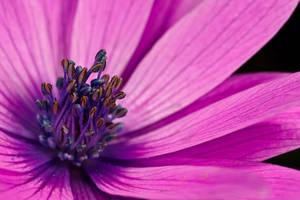 Purple by dalantech