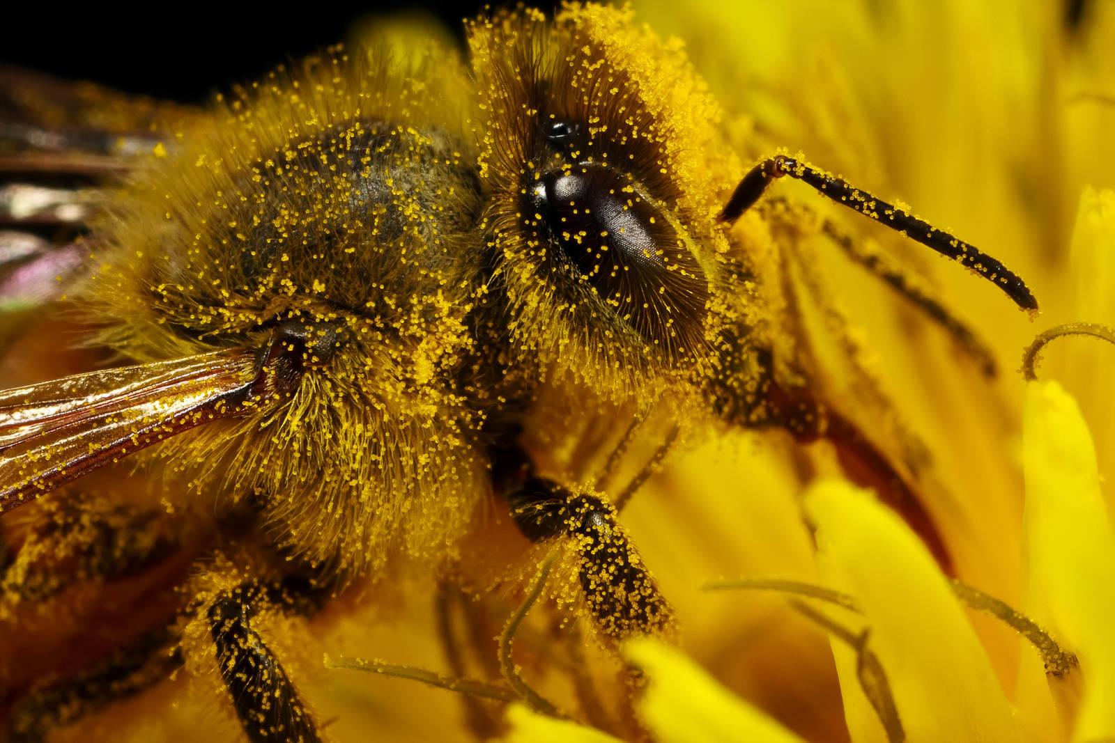 Pollen Duster by dalantech