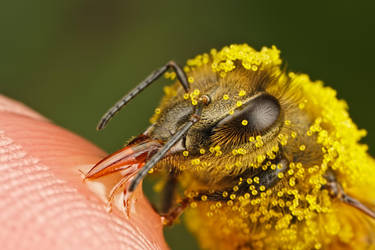 Pollinators Series 3-2 by dalantech