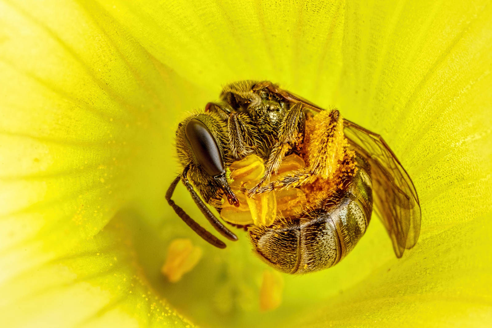 Collecting Pollen by dalantech