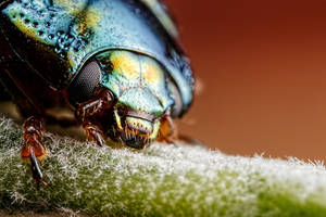 Beetle at 5x by dalantech