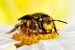 Wool Carder Bee Series 1-5 by dalantech