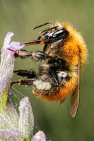 Feeding Bumblebee Series 1-1 by dalantech