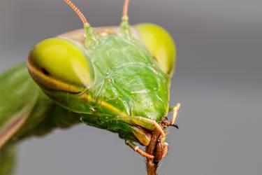 Mantis Maintenance by dalantech