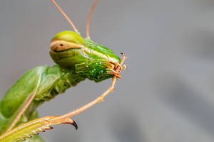 Mantis Maintenance II by dalantech