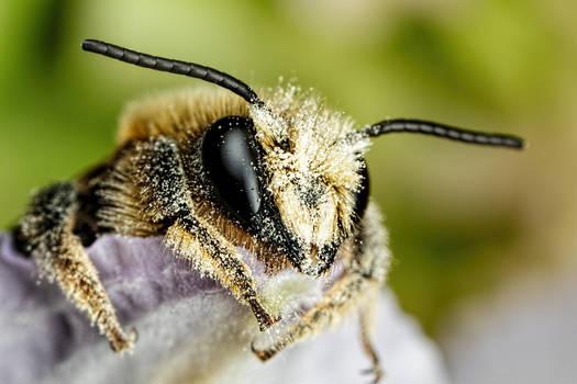 Mason Bee Series 2-1 by dalantech