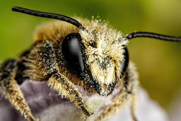 Mason Bee IV by dalantech
