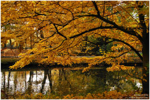 autumn in park I by Wilithin