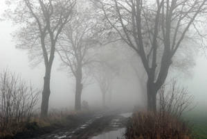 country road in a fog II by Wilithin